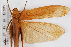 Entomology collection - Polyneoptera