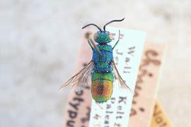 Entomological collection – Hymenoptera
