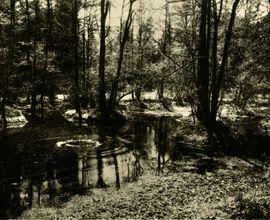Rusalka's pond