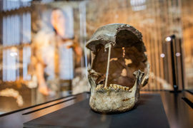 Nejstarší genom moderního člověka objeven v Národním muzeu
