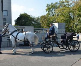 Na Vítkov přijeli i bělouši z Národního hřebčína Kladruby nad Labem