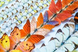 Entomologická sbírka