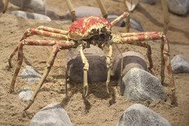 Sbírka bezobratlých živočichů kromě hmyzu