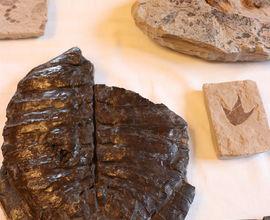 Sbírka fosilií