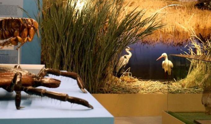 Komentované prohlídky výstavy Světlo a život - Národní muzeum b726a7ecc89