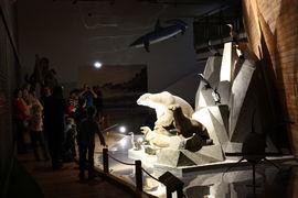 Noc v muzeu: Noční prohlídky expozice Archa Noemova