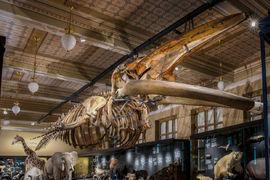 Národní muzeum otevírá stálou expozici Zázraky evoluce