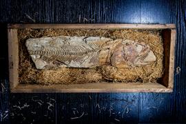Paleontologicka sbírka