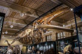 Velryba je zpět! Národní muzeum otevírá stálou expozici Zázraky evoluce  a spouští novou propagační kampaň