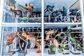 Sbírka ptáků