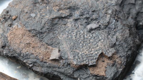 Detail nálezu