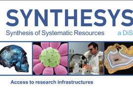 Synthesys plus – Synthesis of systematic resources
