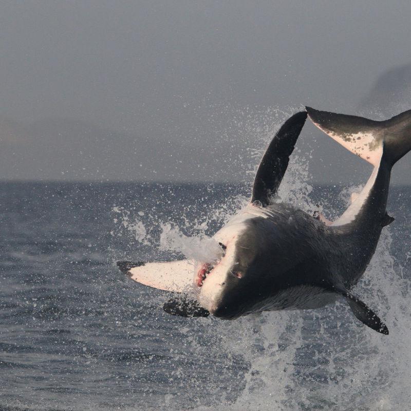Za velkým bílým žralokem kolem světa