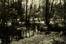 Antonín Dvořák: Inspirace přírodou