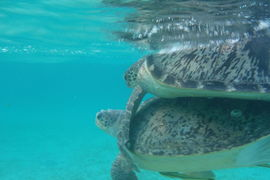 Indonésie – (Nejen) za mořskými želvami na Borneo